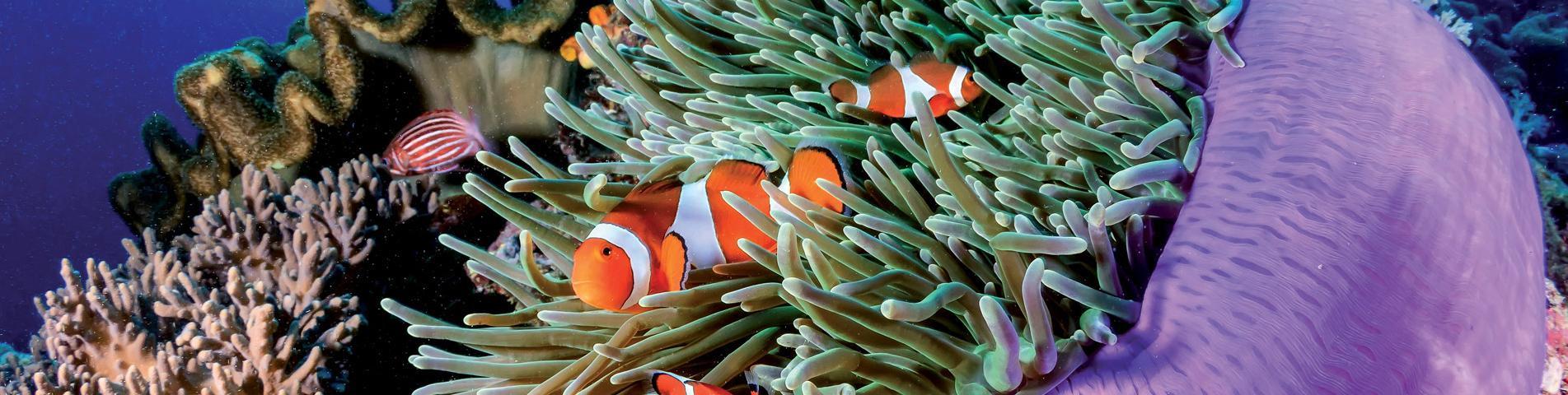 Zoutwateraquarium